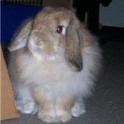 Bunniez profile image