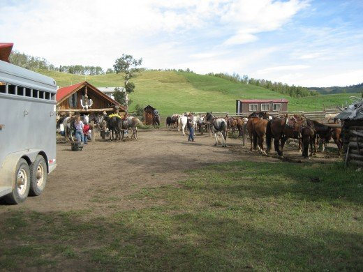 The Anchor D ranch facility in Alberta, Canada, with picketed horses.
