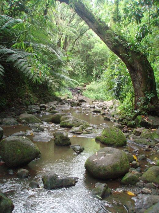 a random river