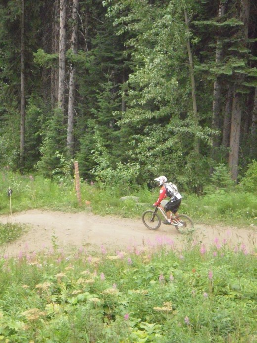 Parts of the mountain bike trail run near conifer forest and fields of fireweed.