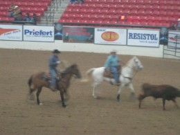 Riders attempting to rope the steer