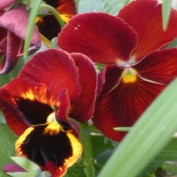 zelica profile image