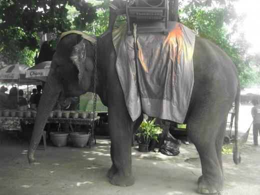 Ayutthaya elephant