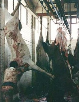 ... to this slaughterhouse.