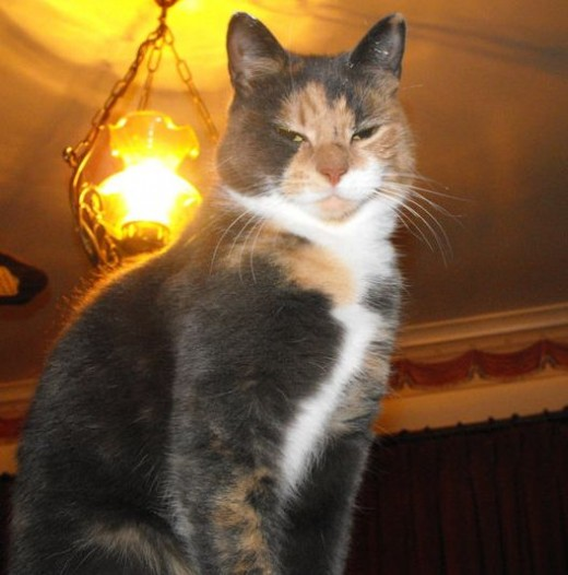 Reason 1: Cats have a god complex: The disapproving look, or thou more superior look, she doesn't let on which it is.