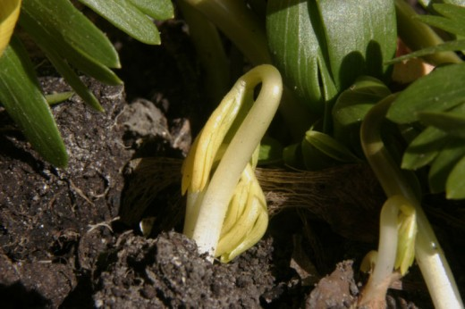 It is never too late to learn how to grow a plant from a seed, there is nothing more satisfying than seeing the shoots of your new plants emerging from the soil.