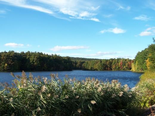 Small Pond, Lake Wintergreen