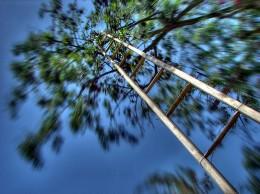 Ladder, Vertigo