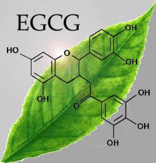 ECGC in green tea