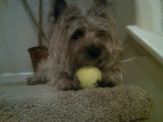 Sometimes Zoe Will Push the Ball Downstairs with Her Nose: If She Feels Like It!