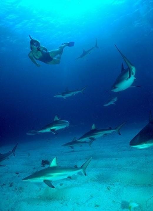 Brenda Adkison Freediving with Gary's Sharks at Walkers Cay, Bahamas!