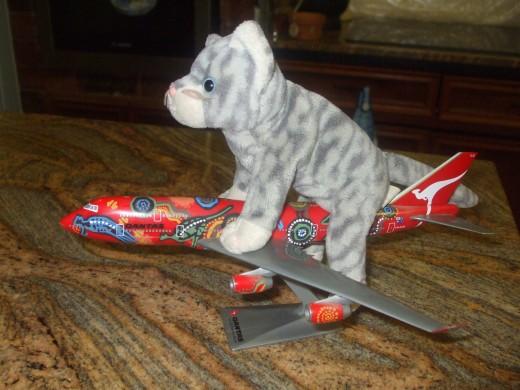 KittyKat likes to travel with Qantas