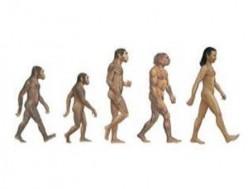 Natural Selection: Evolution Vs Intelligent Design? Or Both?