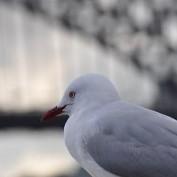 ssid profile image