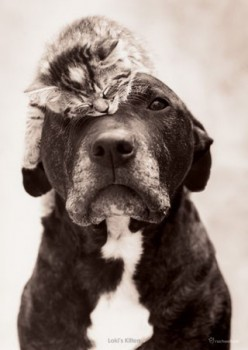 Pit Bulls and Cats: Good Idea or Recipe for Disaster?