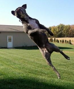 Chris Kross will make ya jump, jump!