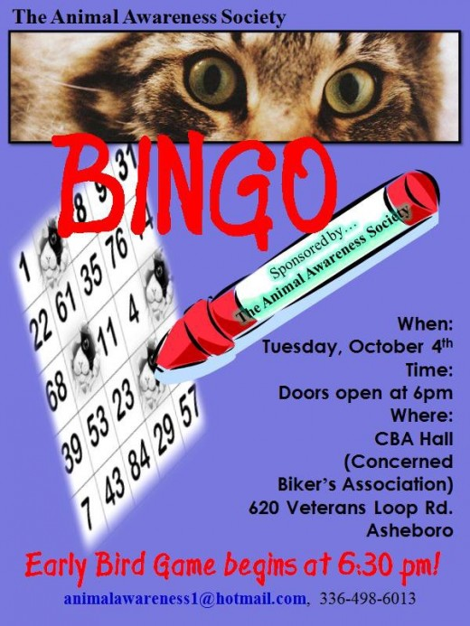 A Bingo flyer created for a wonderful cat-rescue Fundraiser.