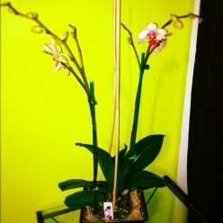 ProFlowers.com: Orchids
