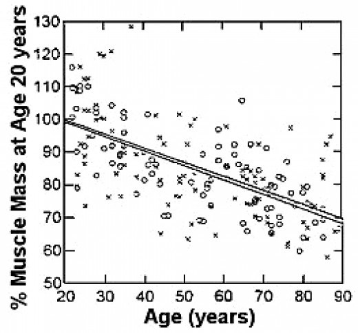 Decline in Muscle Mass with Age