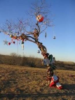 The homeless Christmas Tree