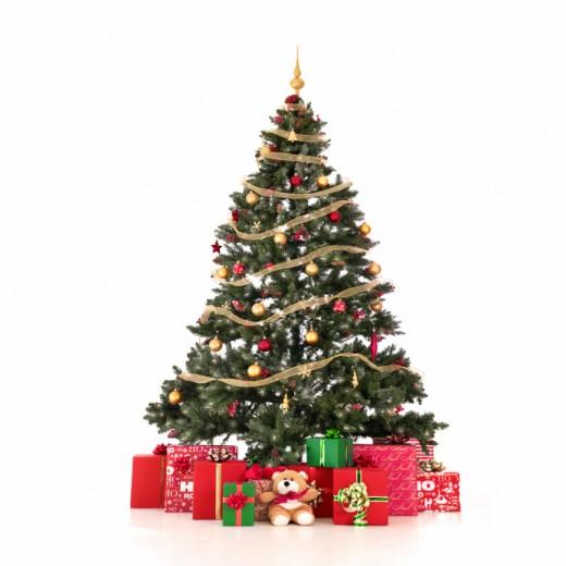 Traditional Christmas tree                                                      Versus