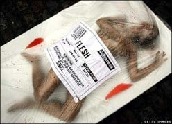 Advertisement Review: PETA controversial print ads - Business strategy advertising