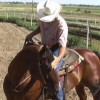 WildHorsetraining profile image