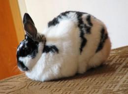 Buns the bunny on her twelfth birthday.