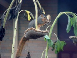 Silly Little Squirrel:  A Poem