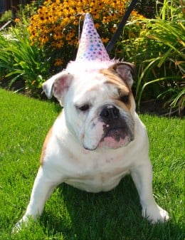 Party hats make the party!