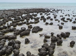Stromatolites in Shark Bay, Western Australia