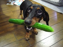German Dog with English Cucumber