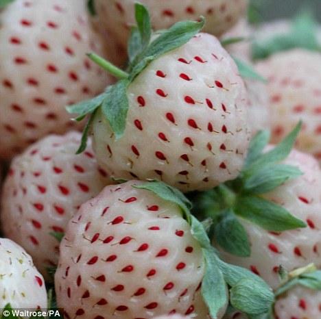 pineberry fruit