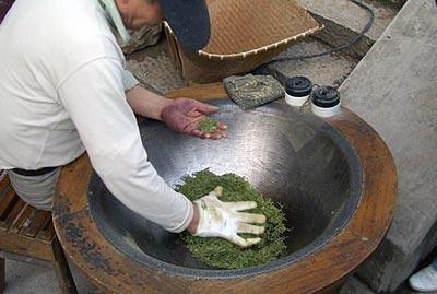 processing green tea