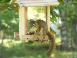 Squirrels: Cute friends or destructive enemies?