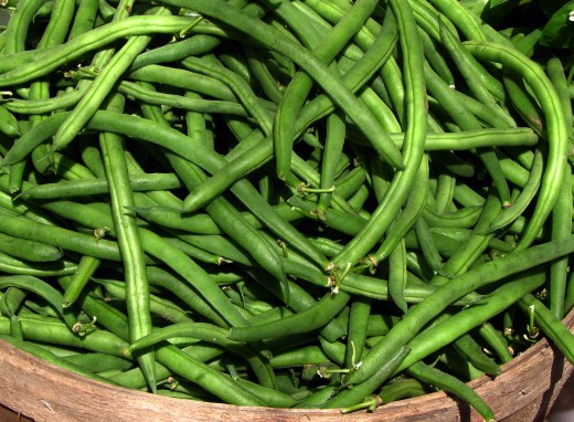 Green beans are tasty and nutritious and easy to grow.