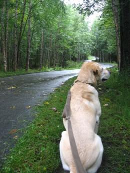 Summer walk at the Coastal Trail