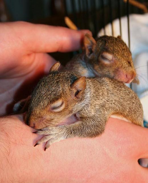Squirrels sleeping on hand
