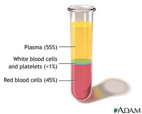 Blood plasma contains coagulating factors