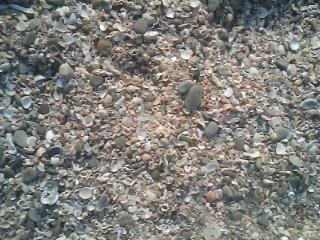Sea shells spread on the sands of St Mary's Island