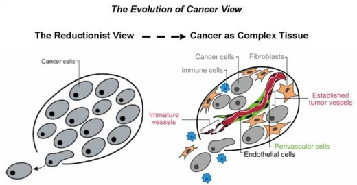 Cancer tumours are often assumed by many to be a mass of homogenous cells, hell bent on gorging themselves on the resources of the cells around them. Indeed, this view is taken when study cells in vitro. The in vivo picture, however, is more sinister