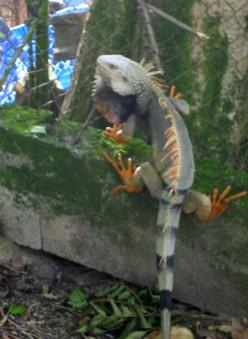 Dinosaur Relatives