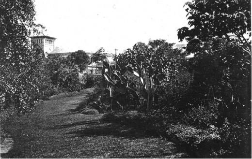 Prickly Pear Circa 1880.