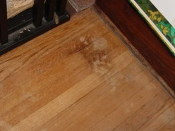 Remove Pet Stains from Your Floor