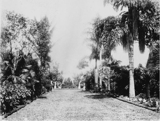 Bowen Park, Palm Tree Lined Path Circa 1889.