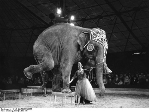 Performing Elephant in Circus - Bundesarchiv, B 145 Bild-F010223-0007 / Unterberg, Rolf / CC-BY-SA