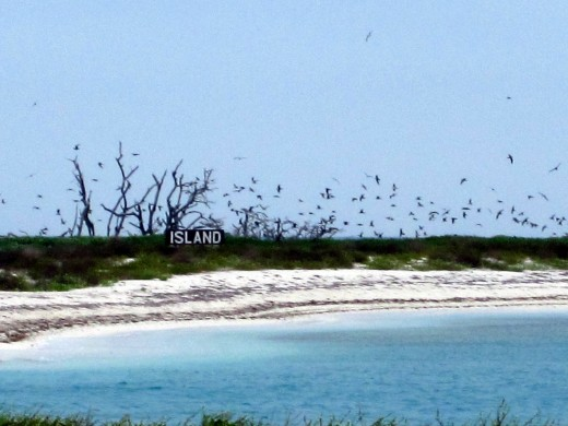 Birds nesting on Bush Key