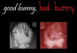 Good Bunny, Bad Bunny: House Bunny Bedding and Accommodation