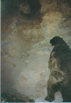 Grand Canyon Caverns in Arizona. This is a stuffed giant sloth replica. Example of cave owners trying to make the cave more interesting.