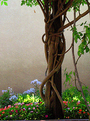 Wisteria Branches and Summer Blooms from beegardener -- mostly always Source: flickr.com